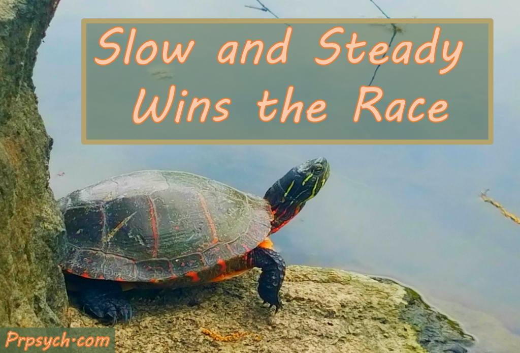 slow steady wins race essay Do you believe in slow and steady wins the race slow and steady wins the race it does not mean that we should be slow in our actions essays, letters.